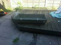 Rabbits and guinea pig cage