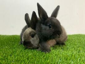 2 cute baby bunnies boy and girl
