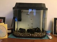 Small tropical fish tank complete