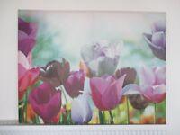 Tulip Canvas