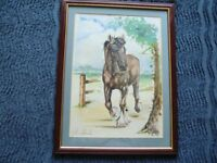 IN KINGS LYNN- LOVELY FRAMED SHIRE HORSE WATERCOLOUR PAINTING