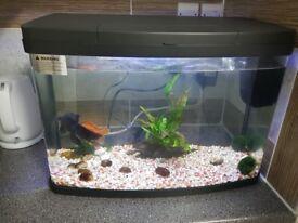 Aquarium 64 liters +canister pump efx 200+ 2 goldfish
