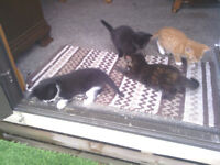 Cats, kittens for sale