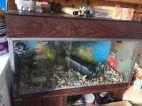 2ft 6 fish tank
