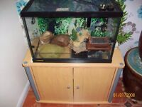 VIVARIUM - FULL SET-UP PLUS EXTRAS - FOR LIZARD OR SNAKE