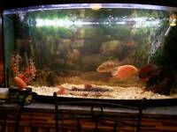 Fish help aquarium maintenance