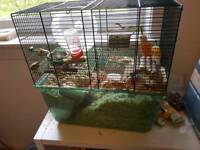 2 young gerbils with cage