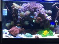 Marine corals for sale Breaking down my marine tank
