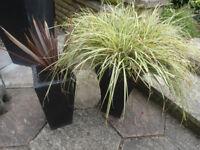 2 black stone pots + plants