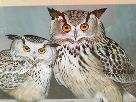 Siberian owls picture in wooden frame