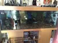Jewel Rio 400 fish tank