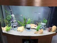 Juwel 250l fish tank and accessories