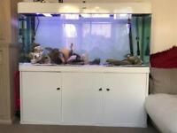 Fish tank 5ft