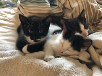 Kittens for sale - ready now £200
