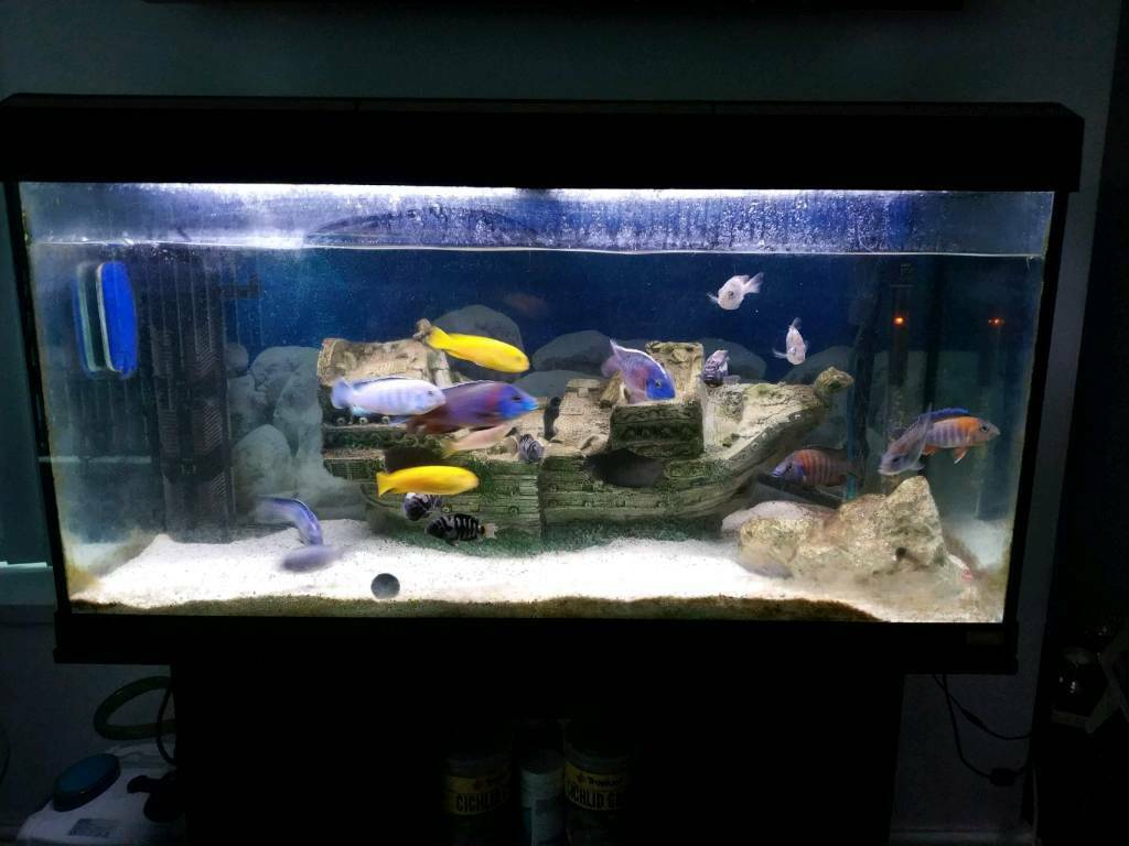 Malawi fish tank 200l aquarium complete set up in for Setting up a fish tank