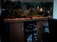 450 liters fish tank with stand
