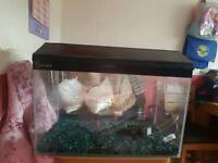 2ft tank with lid and gravel
