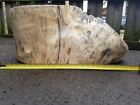 Large piece of drift wood, for garden furniture or ornimental