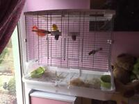 **Bird cage for sale**