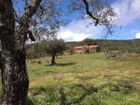 Small farmhouse with 4ha for sale in Portugal