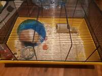 2 syrian hamsters & cages for sale