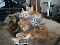 5 beautiful kittens