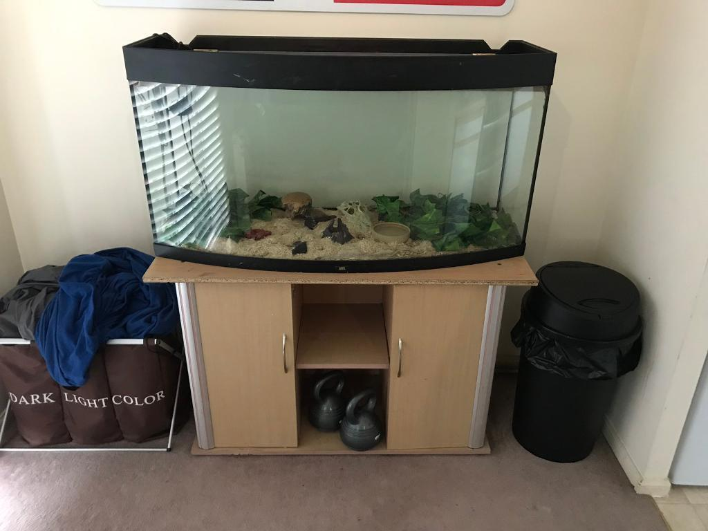 Corn Snake Vivarium Cabinet In Redhill Surrey Gumtree