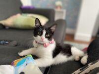 black n white kitten (Bella)