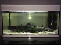 Tropical Fish Tank- SOLD