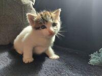 adorable kitten boy