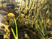 Fish tank aquarium 3d backgrounds made to any size