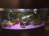 Pet and aquarium