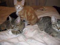 Friendly kittens for sale