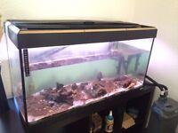 200L Fish Tank w/ FLUVAL 304 External Filter