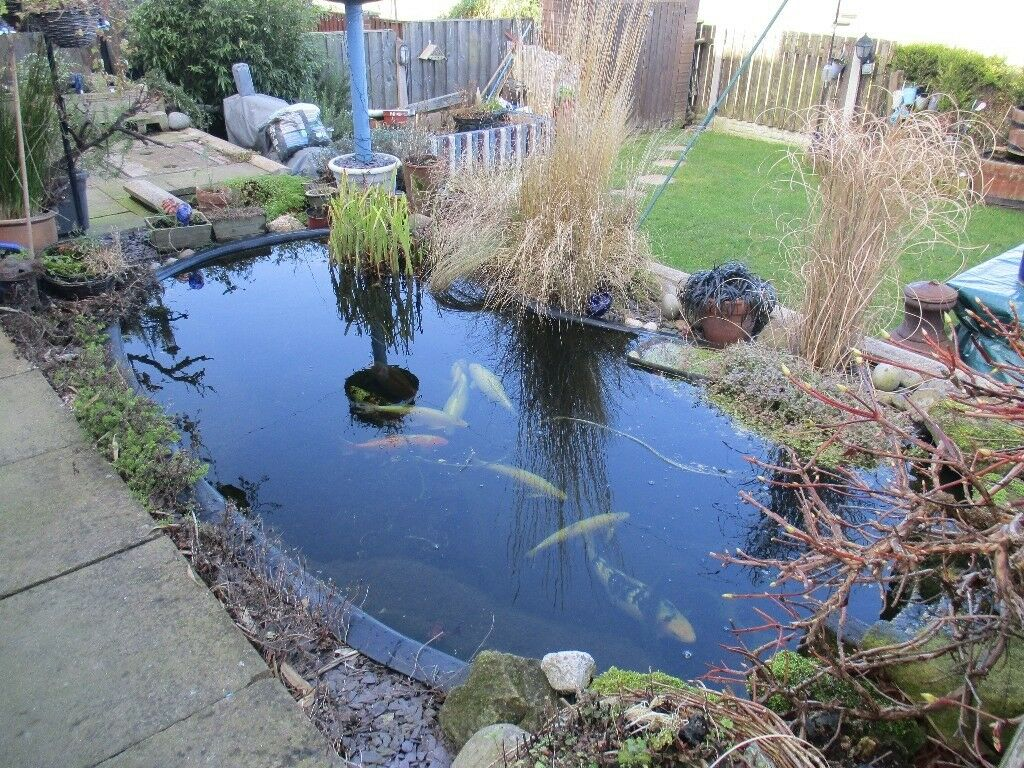 Pre formed kidney shaped fish pond for sale with fish in for Koi pond shapes