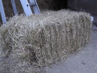 Hay and Straw Gardening