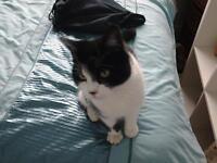 cat aged 4