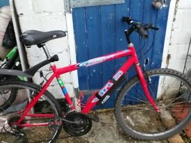 Mountain bike ( men's )