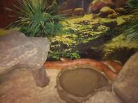 fancy corn snake need good home