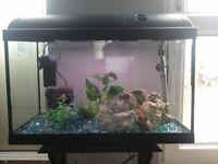 Fishtank complete set up