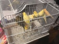 8 canaries