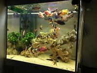 Closing fishtank North London