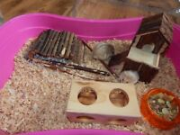 2 Dwarf Hamsters
