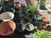 A selection of garden pots