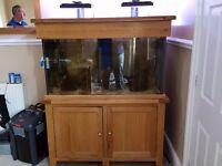 250 litre marine aquarium with sump