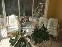 Sun lounge furniture