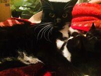 Lovely black kittens