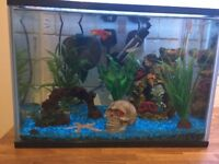 24litre fish tank with 5 x tropical fish and 1 x wood shrimp - TANK INCLUDED