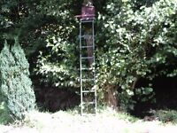 High seat tree standing ladder