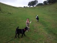 Friendly reliable dog walking service